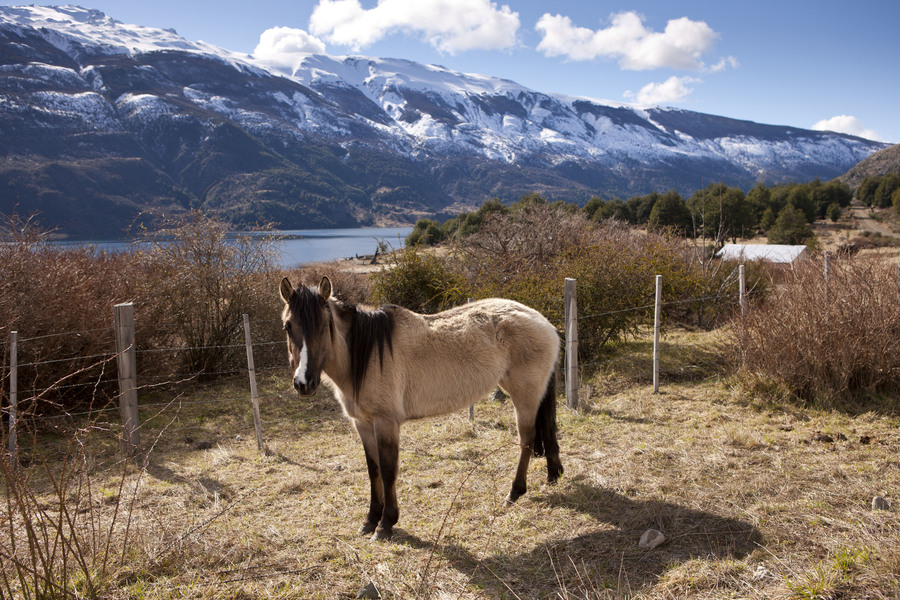 Джип-тур по Патагонии, животные Патагонии, Дикая лошадь, Patagonia Jeep Tour, Animals of Patagonia, Wild Horse