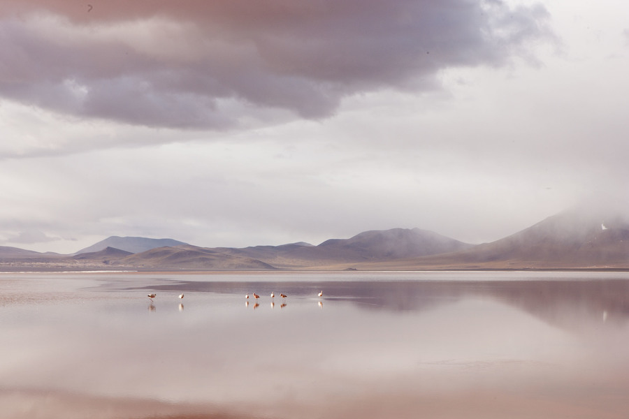 Боливия, розовые фламинго, Bolivia, Flamingoes